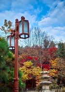 red street lantern in colorful Autumn park