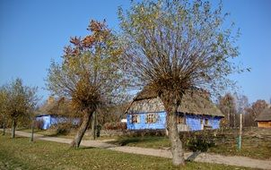trees in the dacha village in Poland