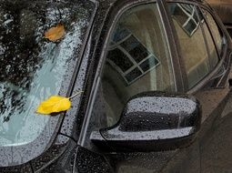 leaf on car