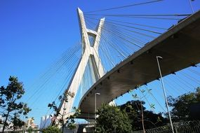Bridge Cable-Stayed in São Paulo