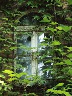 window of an abandoned building in green plants