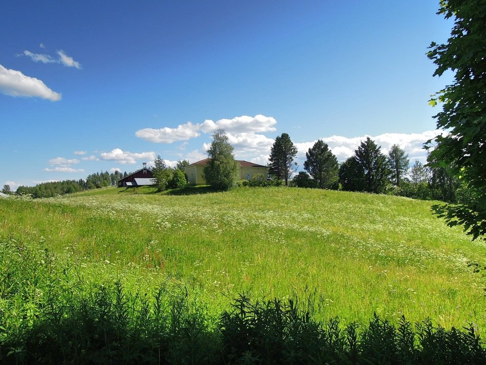 green meadow in north karelia