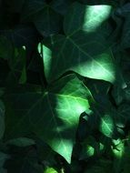 light rays on a green plant