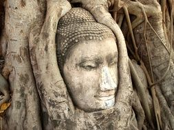 buddha head on tree root