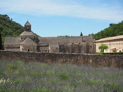 abbaye de sénanque monastery with lavender cultivation