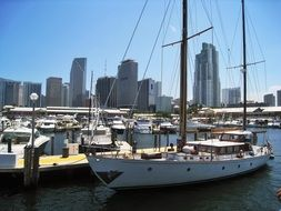 Sailing Vessel in harbor in front of city, usa, Florida, Miami