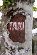 Taxi City sign on tree