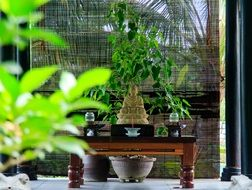 green bonsai and incense on a low table in a meditation room