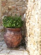 large flower pot near a stone wall