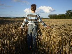 child on a wheat field on a sunny day