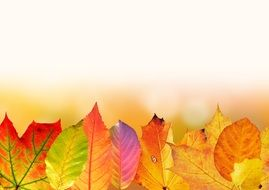 white background with autumn leaves