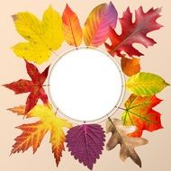 wreath of autumn leaves on a transparent background