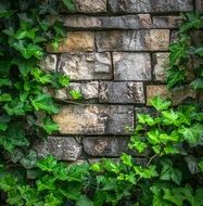 ivied brick wall