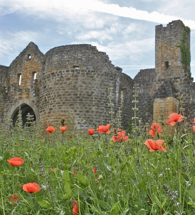 blooming poppies on green meadow at old castle ruins, france, Sarlat