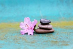 stacked stones and flower of azalea