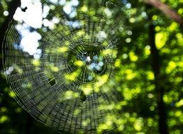 Spider Web Macro Network