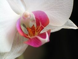 background with closeup of a orchid