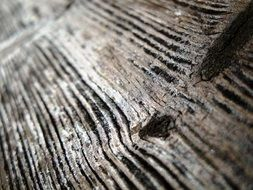 Wood Closeup Weathered Old