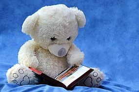 reading white teddy bear