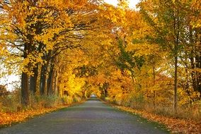 road in countryside in autumn