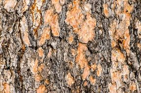 old tree bark texture