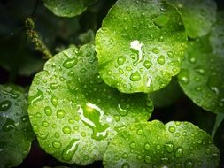 water drops on the green leaves of the plant