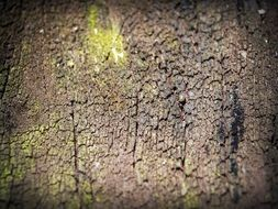 tree bark with green moss