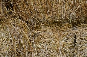 harvested straw