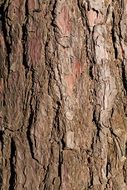 wallpaper with tree bark texture