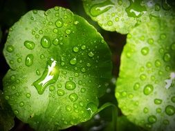 green leaves with water drops close up