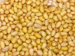 Soy Beans Yellow Vegetables