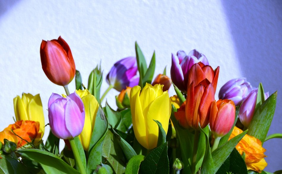 Tulips Happy Background Summer
