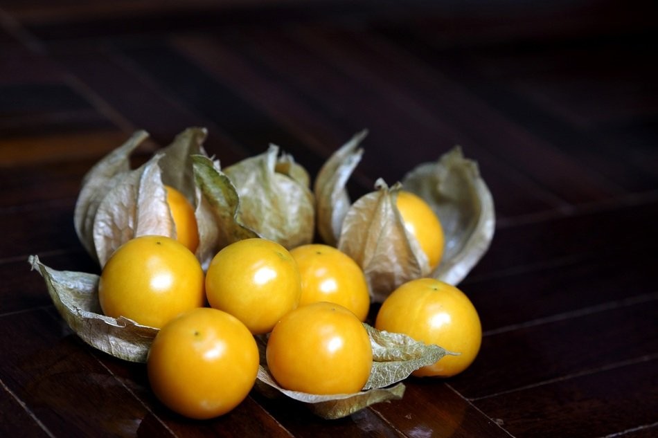 yellow physalis fruits