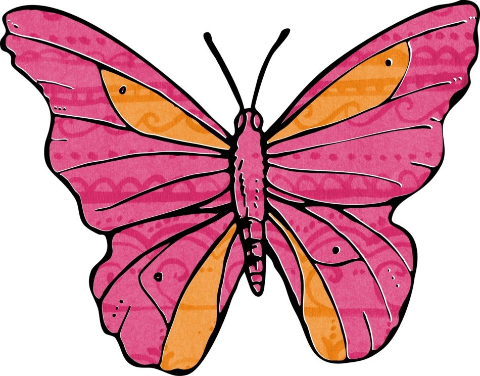 pink butterfly with orange spots