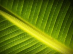 green leaf of a plant close up