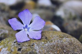 purple flower on a gray stone