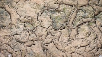 background of cracked soil