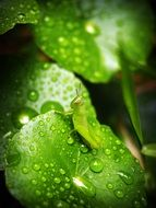 water drops on green leaves close up