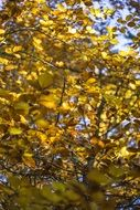 yellow leaves on a tree in autumn