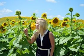 Blond girl is smelling sunflowers in summer