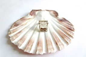 vintage ring on shell
