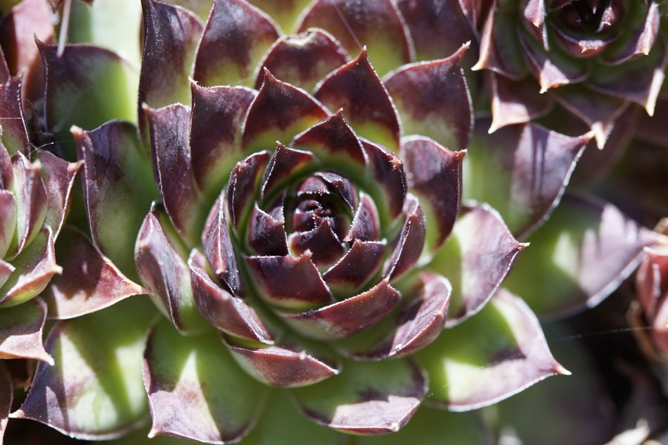 brown green succulents