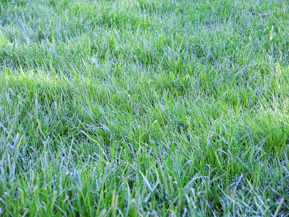 Nature Rush Grass Dew