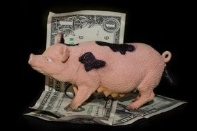 pig and a couple of dollars