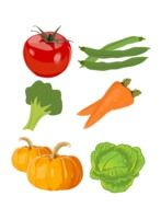 drawings of vegetables on a white background