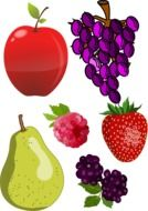 fruit drawings on a white background