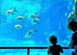 child and mother looking at Fish Tank