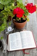 book near a flower in a flowerpot