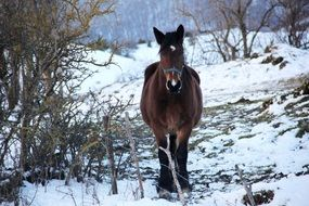 walking horse in winter