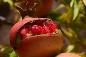pomegranate is a Mediterranean fruit